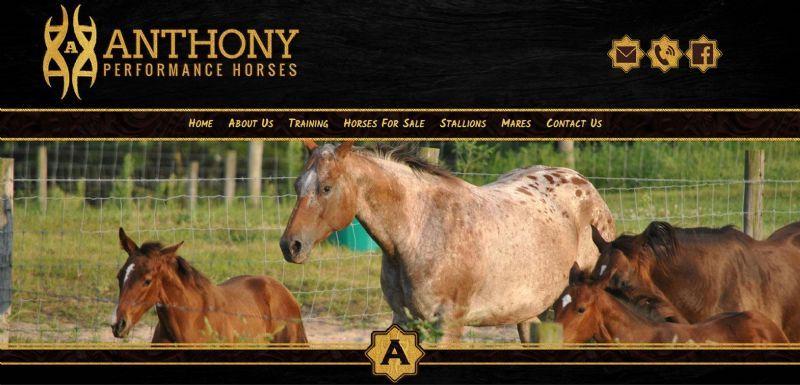 Anthony Performance Horses