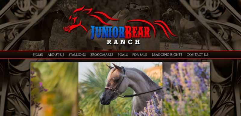 Junior Bear Ranch