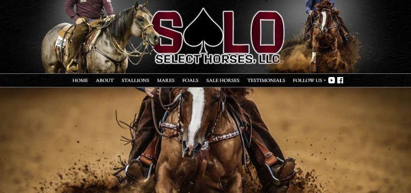 Solo Select Horses, LLC